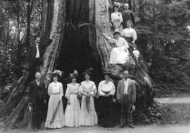 [A group gathered around the Hollow Tree]