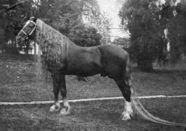 [A horse with a long mane and tail]