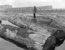 Logs in sorting boom [at] Pacific Mills