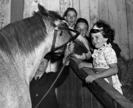 Young girl with horse in Livestock building