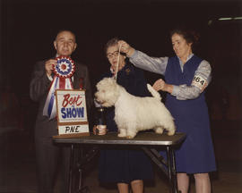 Best in Show [Terrier Group: West Highland Terrier] award being presented at 1976 P.N.E. All-Bree...