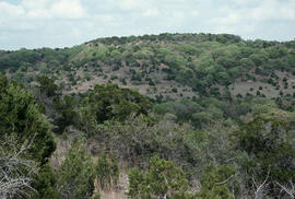 Landscape - general : Texas hill country