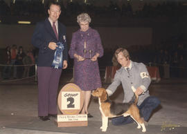 Group two [Hound Group: Beagle] award being presented at 1975 P.N.E. All-Breed Dog Show