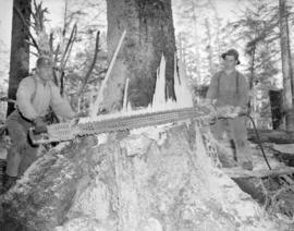 [Chopping down a tree with an air-operated saw on the] Queen Charlotte Islands