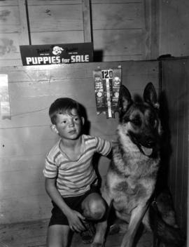 Young boy with P.N.E. all breed dog show prize winning German shepherd