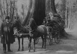 [Family in horse-drawn carriage at the Hollow Tree in Stanley Park]