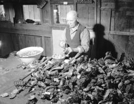 [A man shucking oysters at] Oyster Bay
