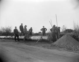 [B.C. Telephone workers preparing to install a telephone pole]