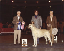 Best in Group [Hound Group: Irish Wolfhound] award being presented at 1974 P.N.E. All-Breed Dog Show