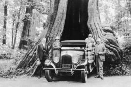 [Car parked in Hollow Tree at Stanley Park]