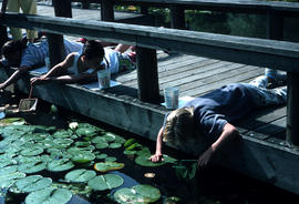 Education : pond peering, age 9 -12