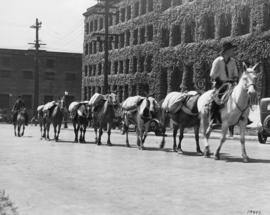 Old time cariboo pack train leaving stables, Beatty and Cambie Streets, 20th July, 1936