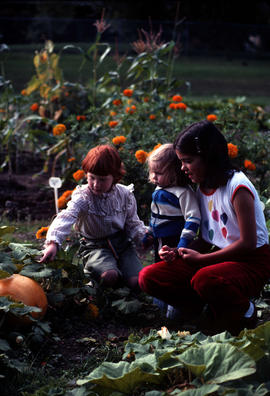 Education : the pumpkin patch