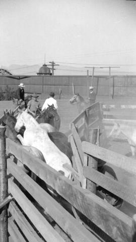 [Horses and cowboys at the Callister Park rodeo]