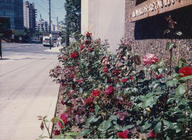 Rose garden [at 1477 West Pender Street]
