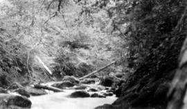 West Coast trip [with Sherwood Lett, Arthur Lord, W.O. Banfield] : The stream from Easter Lake