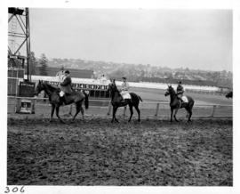 Horses and riders in post parade on racetrack