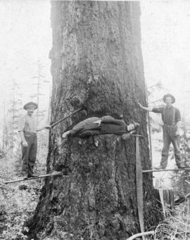 [Tree-felling using spring boards]