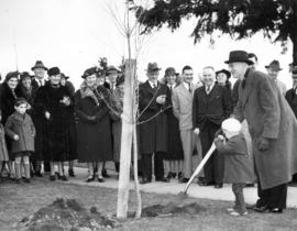 [Tree planting ceremony at Knox Presbyterian Church]