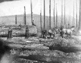 [Logging snags (burnt timber) after a forest fire]
