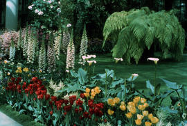 Gardens - United States : Flower gardens, central pool walk, Longwood Gardens