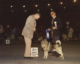 Best in Group [Hound Group: Norwegian Elkhound] award being presented at 1976 P.N.E. All-Breed Do...