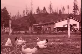 Farm - (Colored) Summer 1935 - Chickens & Ducks at farm
