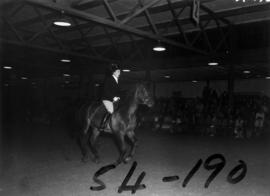 Dressage competition in Livestock building