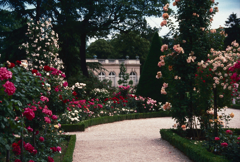 Roses In Garden: France : Bagatelle Rose Garden, Paris