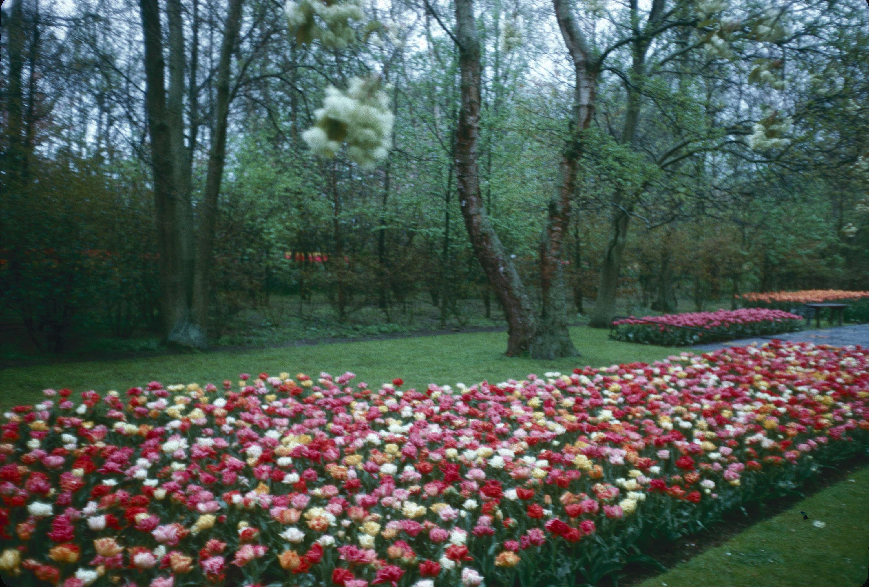 Keukenhof Gardens Holland Garden Ftempo