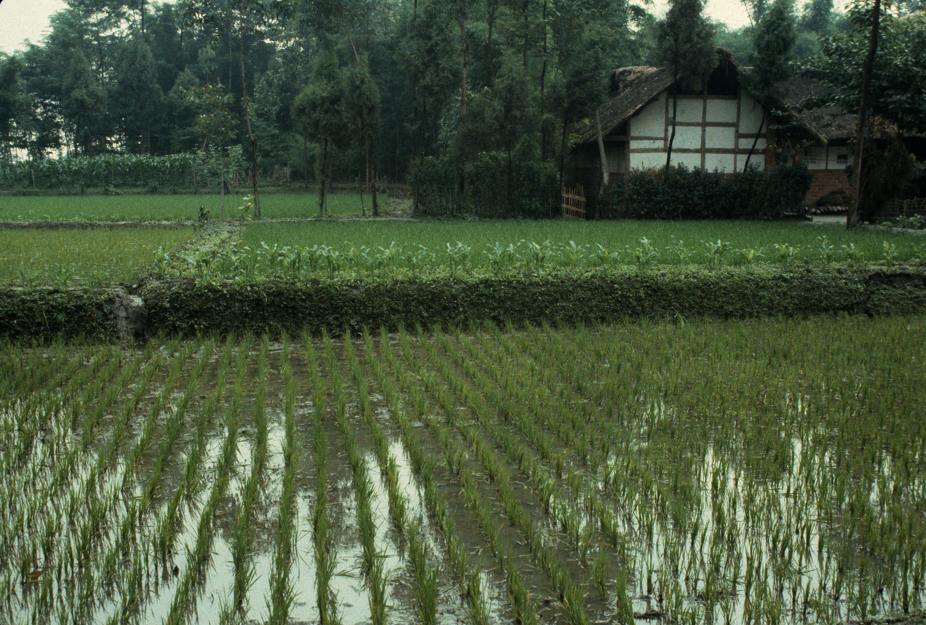 Geographical rice paddies en route to green wall city for Green wall vancouver