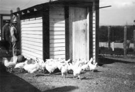 [Boys Industrial School (Bisoq) chicken coop]