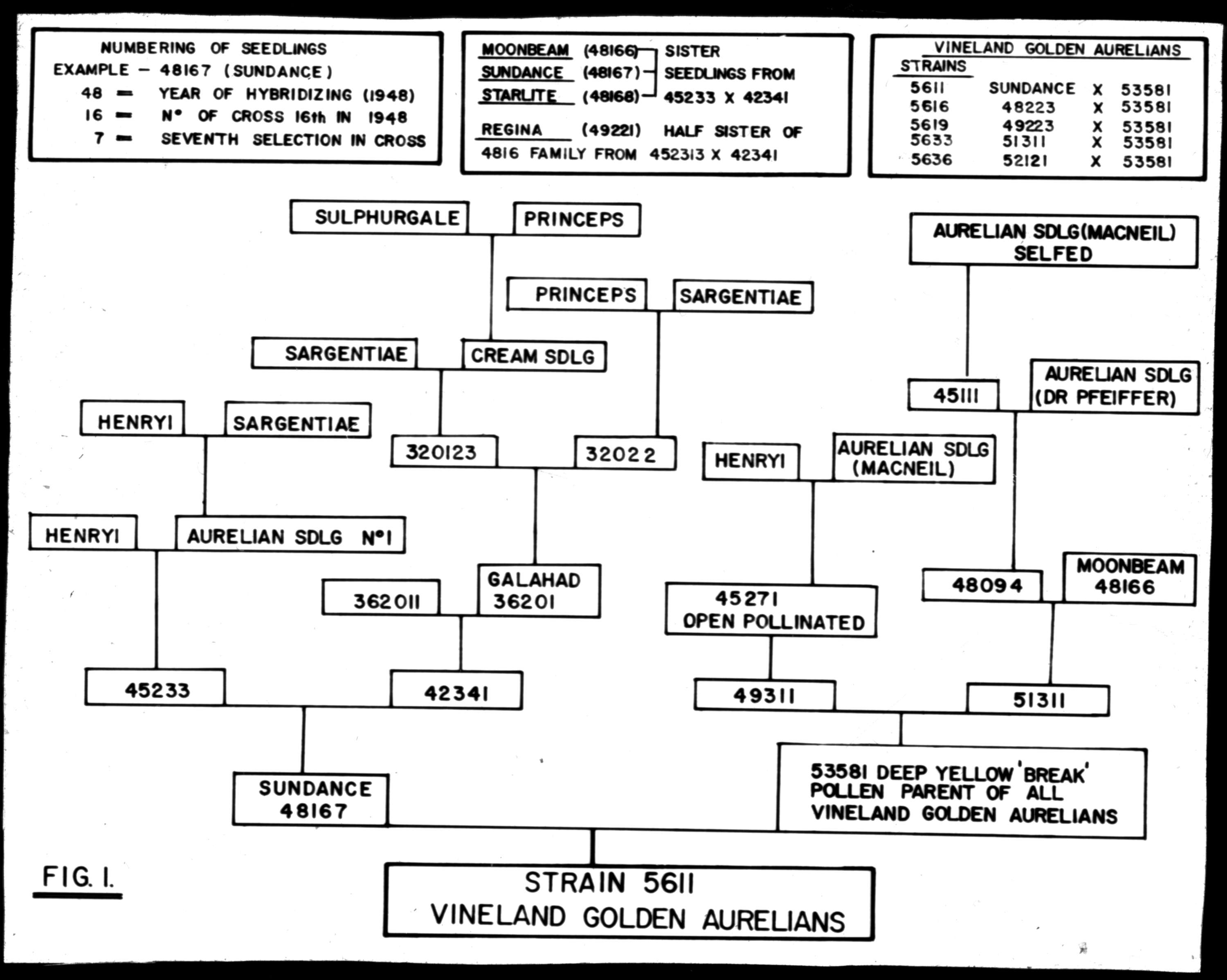 Hybrid Car Wiring Diagram Of A Plant Fuse Box Breeding Chart Fig Ure 1 City Vancouver Archives Rh Searcharchives Ca Engine Topology