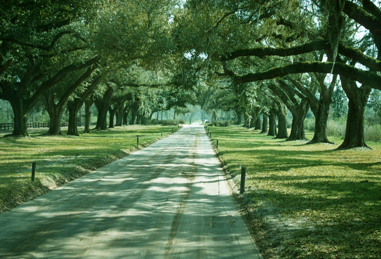 Quercus Specimen Avenue Of Live Oaks South Carolina Landscape Historical City Of Vancouver Archives