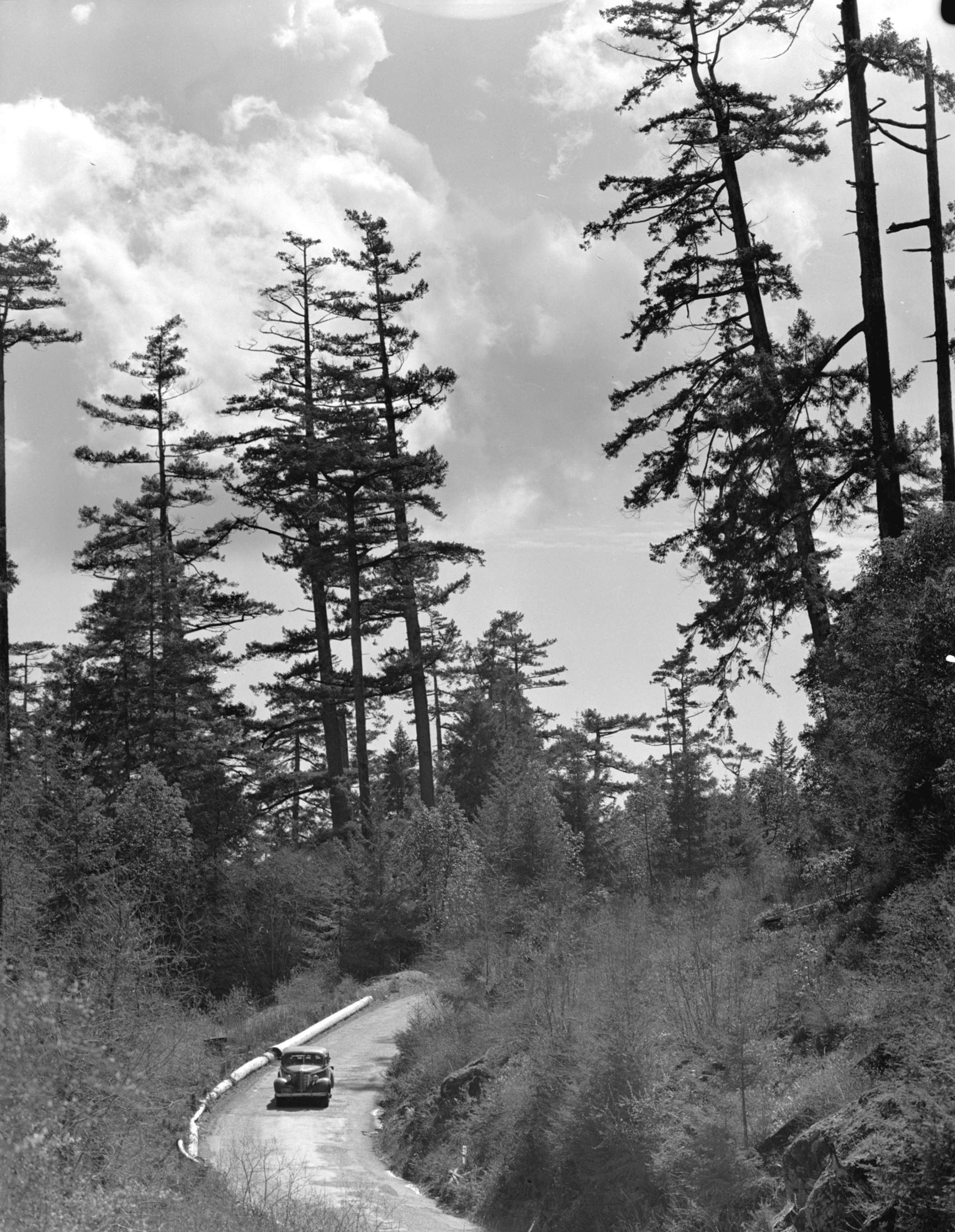 Car on Malahat Drive, Vancouver Island, B C  - City of
