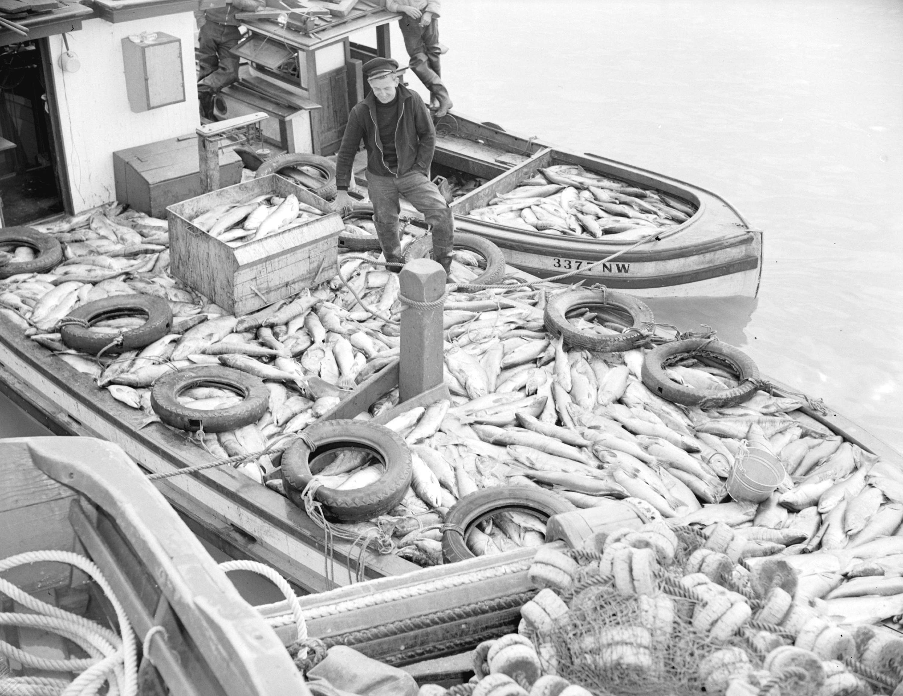 salmon fishing showing a boat load of fish city of vancouver