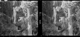 1 Falls, Columbia River Highway