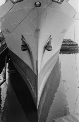 Sea bird [close up of ship's bow]