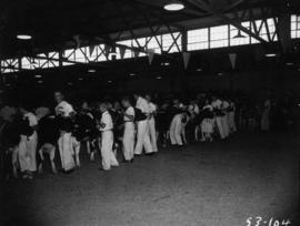 Line of children and [Holstein?] cattle in Junior Farmers competition