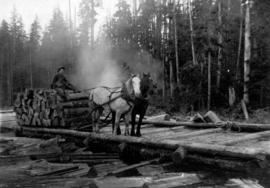 Horses and driver hauling shingle bolts on a sled along a skid road