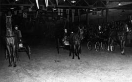 Harness racing horses in Livestock building