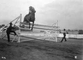6th Field Coy. C.E. [equestrian event - jumping]