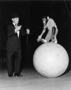 Kirby's Chimpanzees : [publicity photo of trainer with chimpanzee in circus performance]