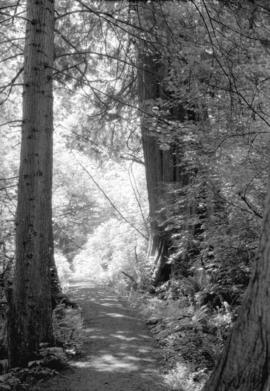 [Trail through trees in Stanley Park]
