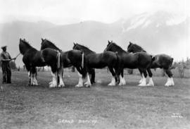 1st prize grand display 1938 Winter Fair [five draft horses with handlers]