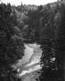 [The first canyon at Capilano Canyon]