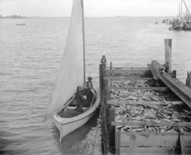 [Delivering Salmon at the Camp, Fraser River]