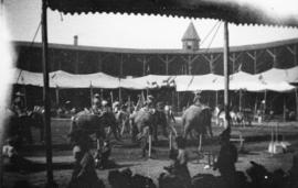 [View of elephant and rider performance from seats of tent at Recreation Park]