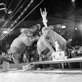 Elephants performing in P.N.E.-Shrine Circus in P.N.E. Forum