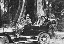 [A sightseeing car in front of the Hollow Tree]
